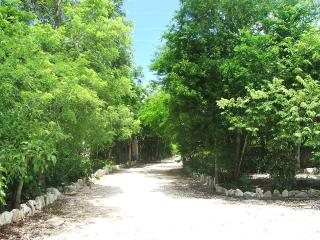 Casita in Jungle Paradise - Puerto Aventuras vacation rentals