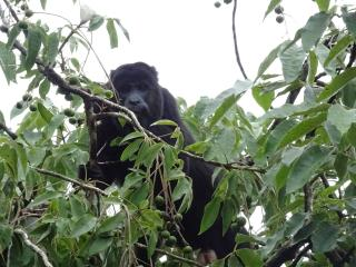 La Primavera Wildlife Observation Station - Cayo vacation rentals