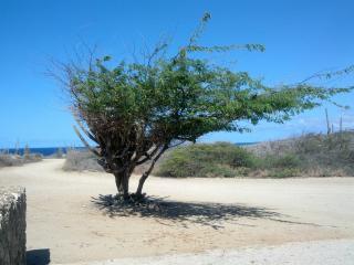 the Palmtrees and Aloe apartment - Oranjestad vacation rentals