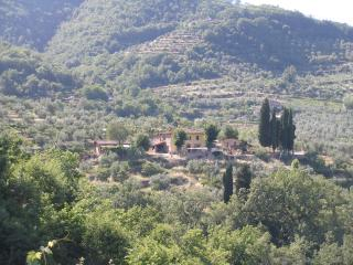 Chianti, olive groves, vines, views, relax. - Radda in Chianti vacation rentals