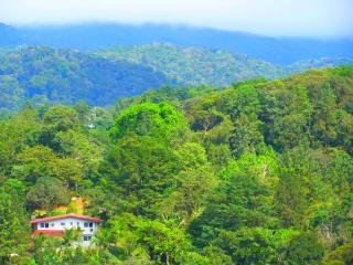 TreeHouse CerroAzul - Cerro Azul vacation rentals