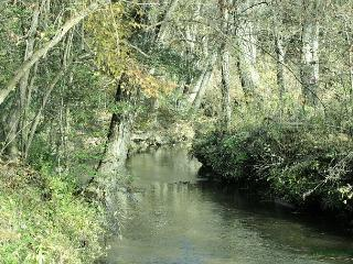 Little Singing Creek- to fish in this cozy, secluded bend just for 2 in love! - Blairsville vacation rentals