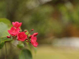 TuiTui House - Rarotonga vacation rentals