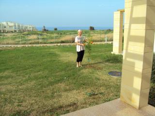 Apartment - Ayios Amvrosios vacation rentals