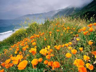 3690 Panoramic Point - Tranquil Big Sur Paradise, Ocean Views For Miles - Big Sur vacation rentals