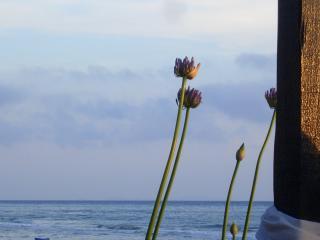Circeo, sea view, private parking, terrace, garden - Sperlonga vacation rentals