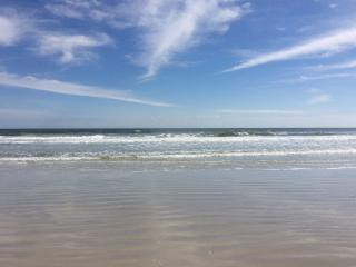 New Pictures! Florida is Blooming. - Flagler Beach vacation rentals