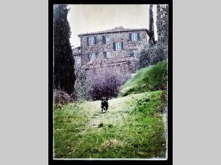 chiantishire lovely place - Siena vacation rentals