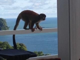 Stunning Villa, Ocean Views, Private Pool, Monkey Visitors Daily - Manuel Antonio vacation rentals