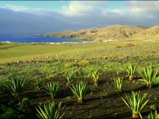 Casa Playa Quemada - Lanzarote vacation rentals