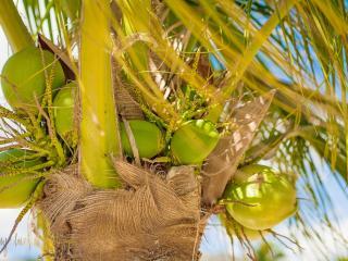 Love sleeping by the Ocean? Enjoy Breezy Stay! - Jacmel vacation rentals