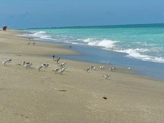 Resort living --- Golf, Pool & Beach - Fort Pierce vacation rentals