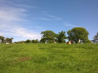 Hobbs Bottom Farm Cottage - Box vacation rentals