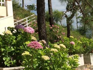 ARCADIA - Solan vacation rentals