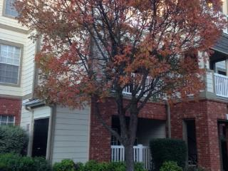 First Floor Condo - Fayetteville vacation rentals
