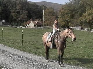 100-Acre Farm w/ Horses Poultry Trout Waterfall - Boone vacation rentals