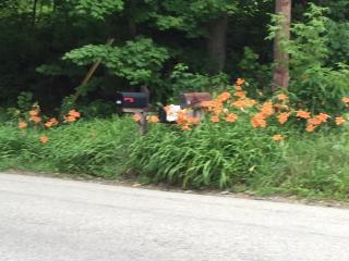 Hillside Cottage - Ligonier vacation rentals