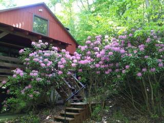 Doe Hollow Location: Between Boone & Banner Elk - Boone vacation rentals