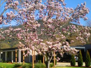 Grevillea Gardens Apartments - Bright vacation rentals
